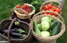 Jardins d'une nouvelle ère, permaculture et agro-écologie… Lancez-vous !