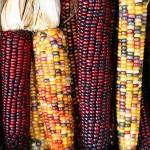 Mexique : La justice ordonne la suspension des autorisations de cultures d'OGM (inf'OGM)