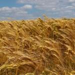 Agriculteurs et jardiniers seront-ils bientôt obligés de cultiver dans la clandestinité ? (Bastamag)