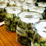 Les conséquences de la légalisation du cannabis dans le Colorado