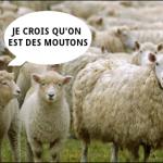 Suis-je un Charlie ou un mouton ?