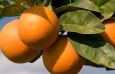 des oranges à voir