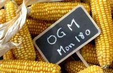 OGM, du poison dans vos assiettes